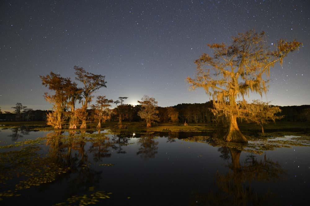 Caddo Lake Camping Texas
