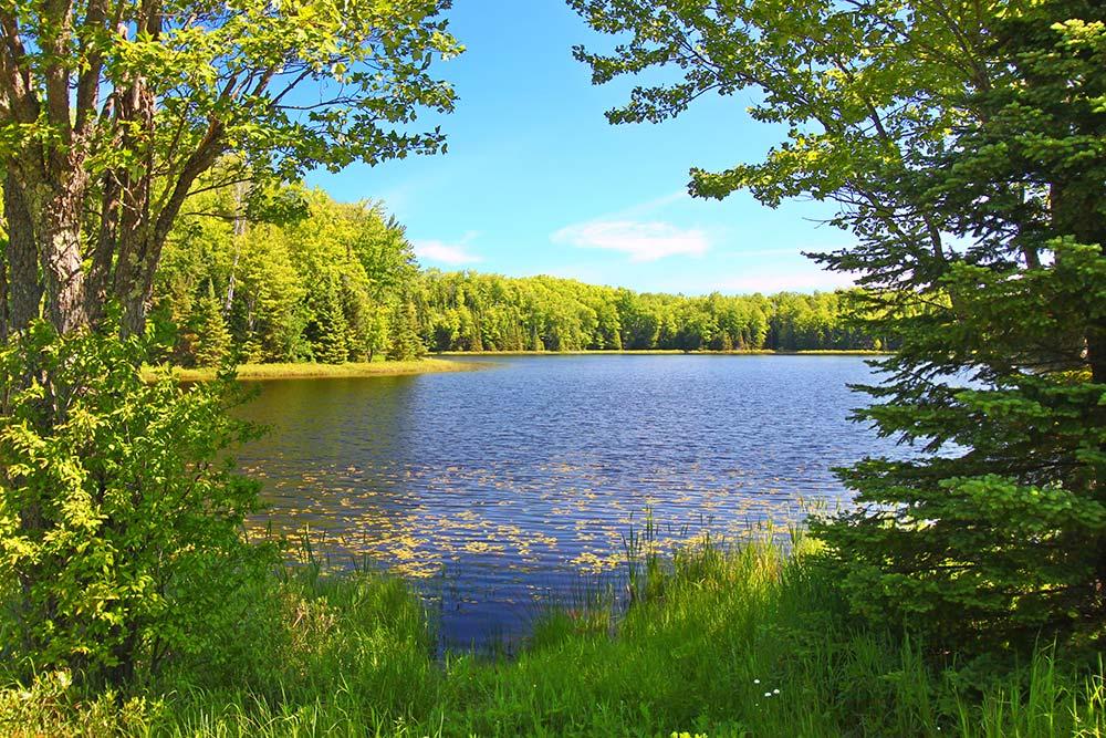 Northern Highland American Legion State Forest
