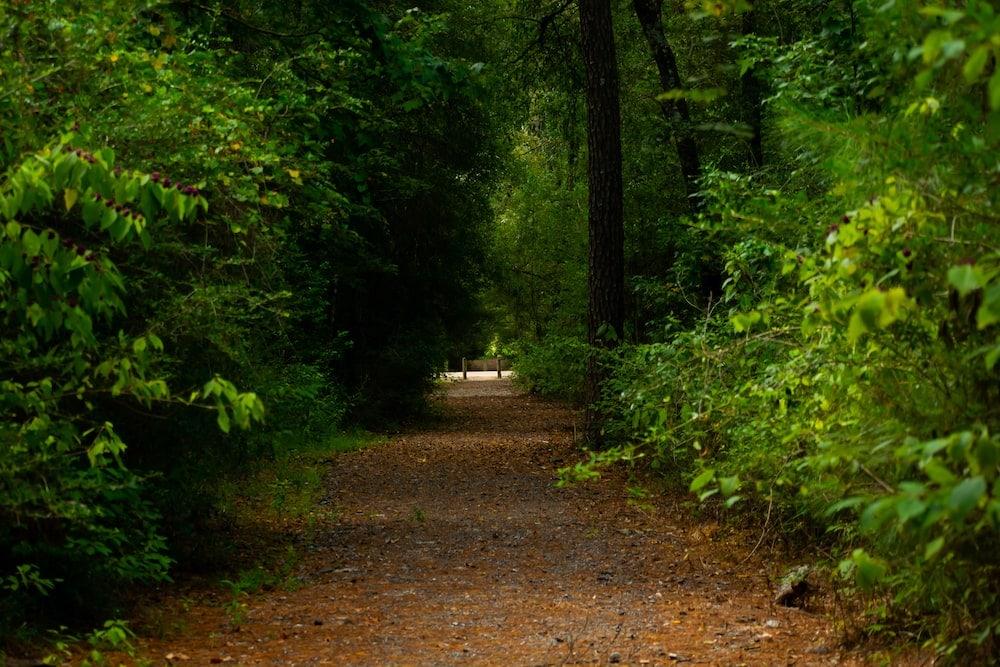 Lake Houston Wilderness Park camping