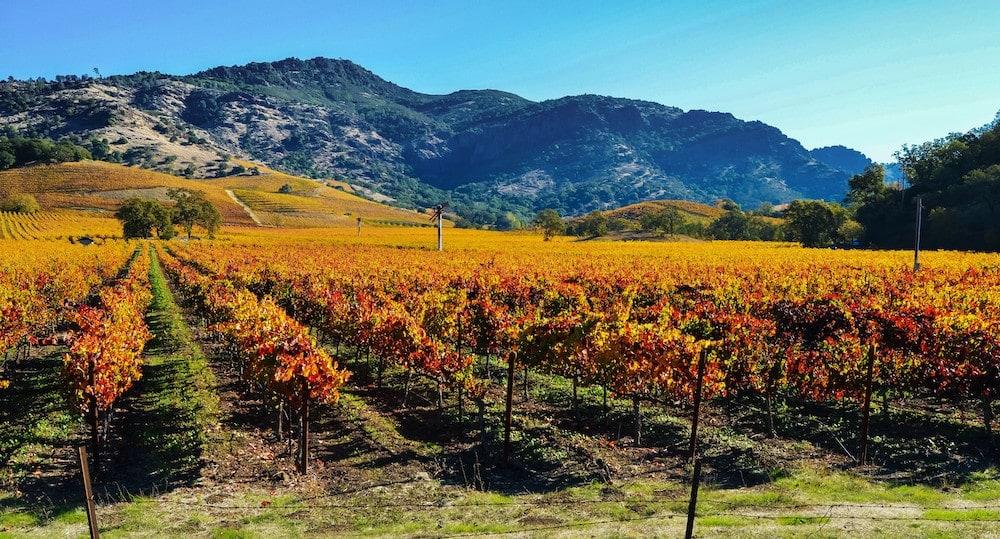 Napa Valley fall California
