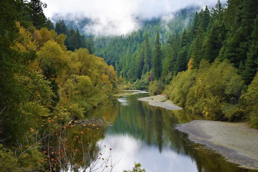 Humboldt Redwood State Park fall California