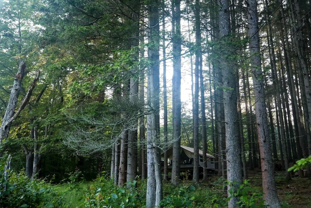 Wolf Hollow Camp nyc glamping