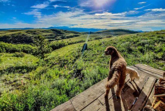 dog friendly cabins colorado